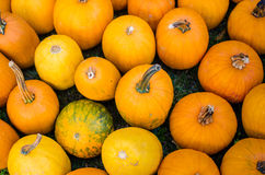 Pumpkins. Various pumpkins waiting for halloween royalty free stock images