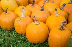 Pumpkins. Various pumpkins waiting for halloween stock photos