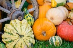 Pumpkins. Various pumpkins waiting for halloween royalty free stock photography
