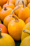 Pumpkins. Various pumpkins waiting for halloween Stock Images