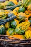 Pumpkins. Various pumpkins waiting for halloween royalty free stock photos