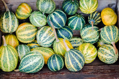 Pumpkins. Various pumpkins waiting for halloween stock photography