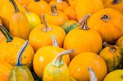 Pumpkins. Various pumpkins waiting for halloween royalty free stock photo