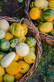 Pumpkins. Various pumpkins waiting for halloween Royalty Free Stock Image