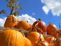 Pumpkins. With Blue Sky Royalty Free Stock Photography