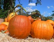 Pumpkins. On Hay stock image