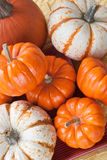 Pumpkins. Assorted sizes and types. Top view Royalty Free Stock Images