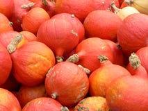 Pumpkins. A mass of orange pumpkins Stock Image