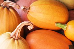 Pumpkins. Orange and red pumpkins to rest upon heap royalty free stock images