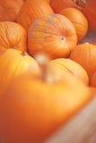 Pumpkins. Close-up view of large group of orange pumpkins Stock Photos
