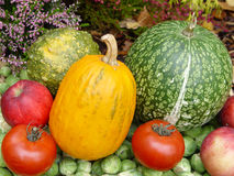 Pumpkins. Fall colours Royalty Free Stock Photos