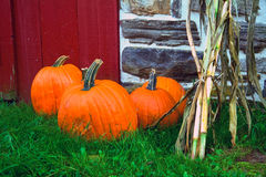 Pumpkins. Various size pumpkins on the ground in front of red barn stock images