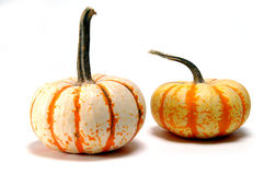 Pumpkins. Two pumpkins Royalty Free Stock Image