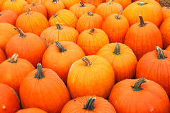 Free Pumpkins Royalty Free Stock Images - 5957969