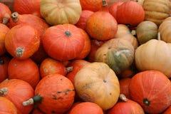 Pumpkins. Colourful mini-pumkins ready for sale Stock Images