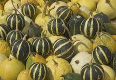 Pumpkins. Harvest of all kinds of pumpkins Stock Photos