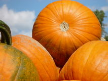 Pumpkins. In pile against sky, horizontal Royalty Free Stock Photography