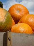 Pumpkins. In pile against sky Stock Photo
