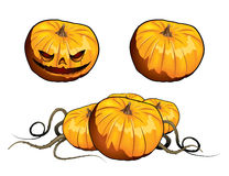 Pumpkins. There are pumpkins on white background Stock Photography