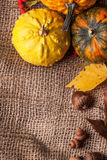 Pumpkins with acorns and leaves Royalty Free Stock Photos
