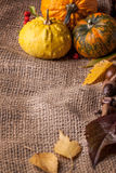 Pumpkins with acorns and leaves Royalty Free Stock Photography