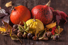 Pumpkins with acorns and leaves Royalty Free Stock Image