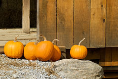Pumpkins Against Barn Door Stock Photos