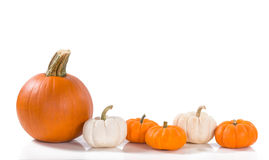 Pumpkins against white background Royalty Free Stock Photography