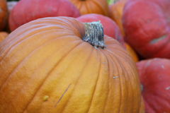 Pumpkin close-up Stock Images