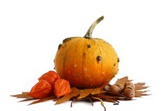 Pumpkins And Gourds On Isolate Stock Photography