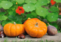 Pumpkins ans seasonal fruits Stock Images
