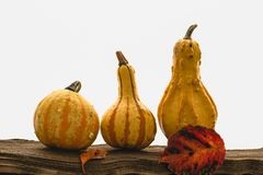 Pumpkins, apples and autumn leaves royalty free stock images
