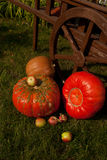 Pumpkins and apples in the garden Royalty Free Stock Image