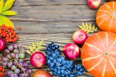 Pumpkins, apples, grapes and rowan berries on a wooden background. Concept of autumn harvest Royalty Free Stock Photos