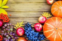 Pumpkins, apples, grapes, rowan berries and yellow leaves on a w Stock Images