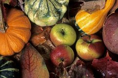 Pumpkins, apples and leaves Stock Photography