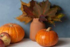 Pumpkins. Apples. Maple leaf. Autumn still-life. Harvest royalty free stock photography