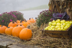 Pumpkins and Apples on Straw. Bushel of apples in a basket next to pumpkins in an autumn setting Royalty Free Stock Images