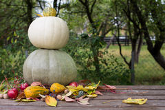 Pumpkins arangement Royalty Free Stock Image