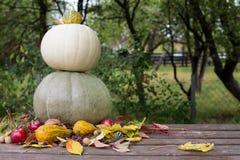 Pumpkins arangement Royalty Free Stock Image