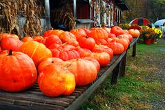 Free Pumpkins Are Displayed At A Roadside Farm Stock Images - 182288484