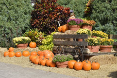 Pumpkins around am old farm wagon Royalty Free Stock Images