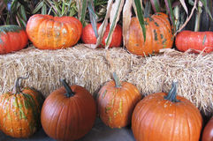 Pumpkins arranged on bales of hay. Royalty Free Stock Images