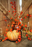 Pumpkins arrangement Royalty Free Stock Photo