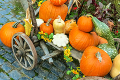 Pumpkins arrangement on handcart Stock Photography
