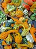 Pumpkins assortment stock photography