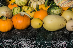 Pumpkins assortment for sale on grass field Stock Images