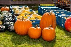 Pumpkins assortment for sale on grass field Stock Image