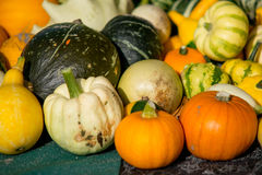 Pumpkins assortment for sale on grass field Royalty Free Stock Photos