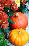 Pumpkins and aster. Two pumpkins with aster flowers outdoor stock photography